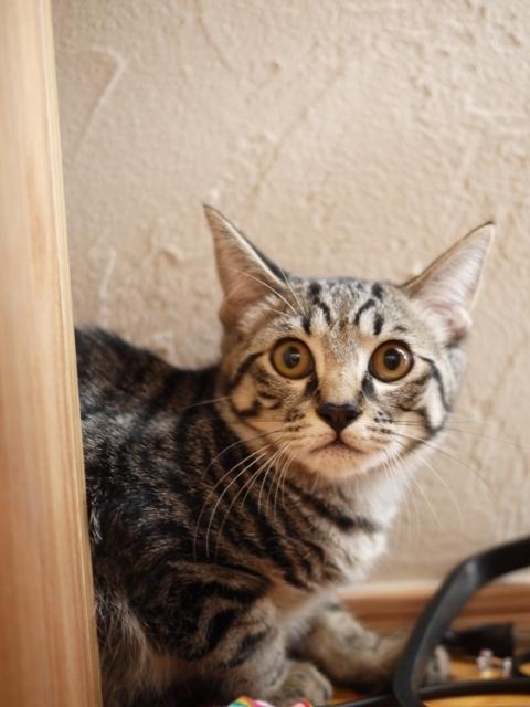 猫のお留守番 星尾くん編。_a0143140_23031407.jpg