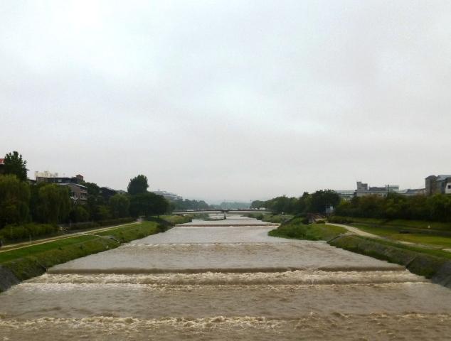大雨の朝と玉虫_e0230141_08494244.jpg