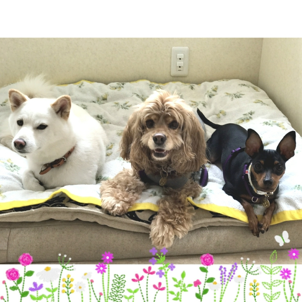 9月12日(火)…犬との暮らし方教室&パソコン教室_d0256356_07274734.jpg