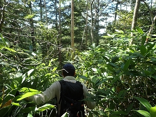 大滝と苔むした原生林の沢(乗鞍岳久手御越谷)_e0064783_21102178.jpg
