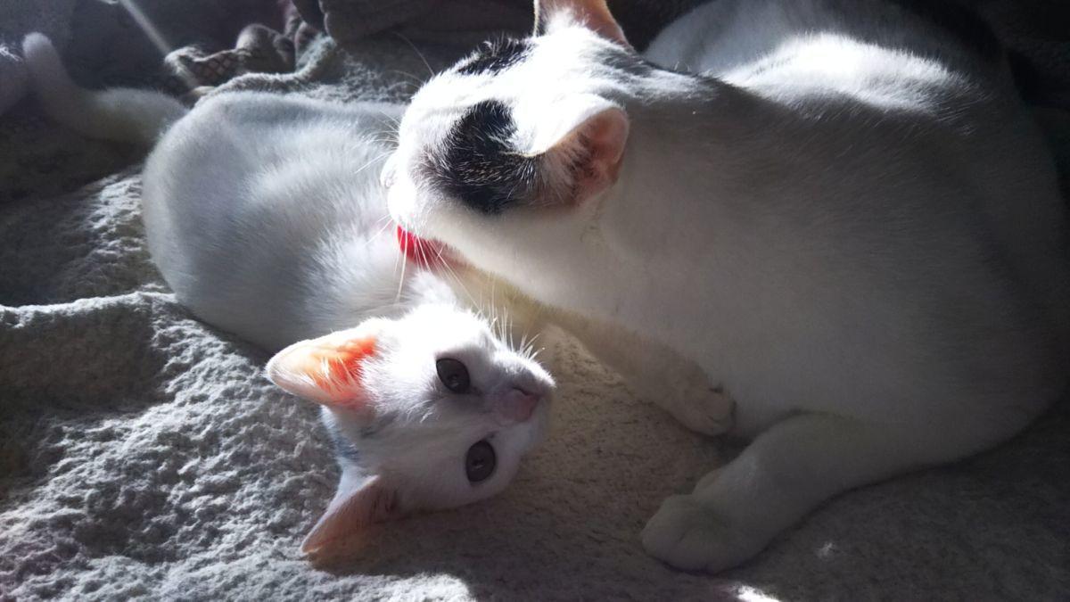 ペンションラズベリーファームの宿猫に新メンバー! : 那須高原ペンション通信(オーナー通信)