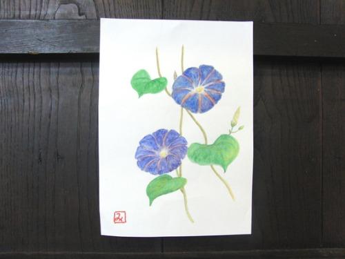 水彩画 ~ 朝顔 ~_e0222340_1685324.jpg