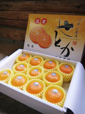 究極の柑橘「せとか」 摘果作業と玉吊り作業 樹勢も良く来年活躍する新芽も元気に芽吹いてます!_a0254656_19051139.jpg
