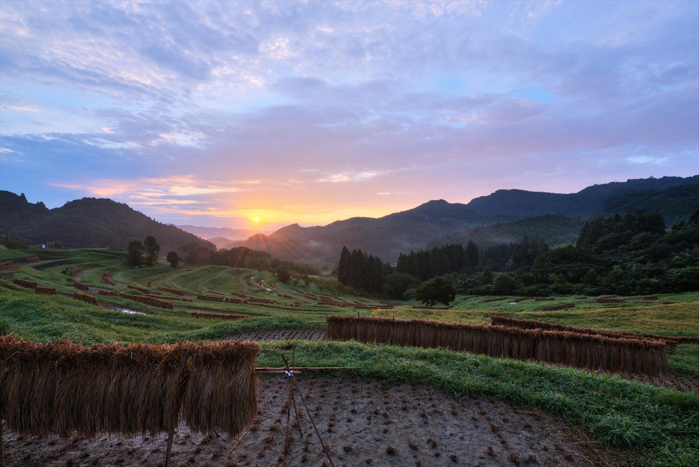 収穫の朝 ~秋の大山千枚田~_f0018464_2231275.jpg