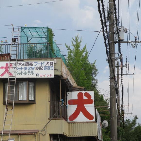歌姫の△´は平城の2号 奈良_c0001670_21275553.jpg