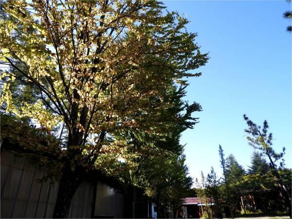 週末の天気と気温(9月3週目)_b0174425_17102973.jpg