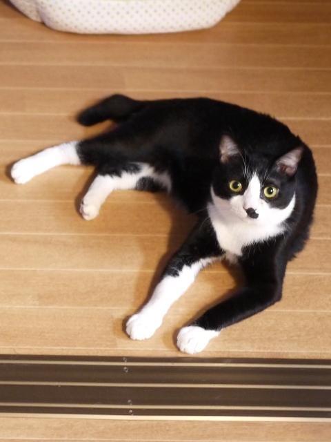 猫のお留守番 仁くん編。_a0143140_22492413.jpg