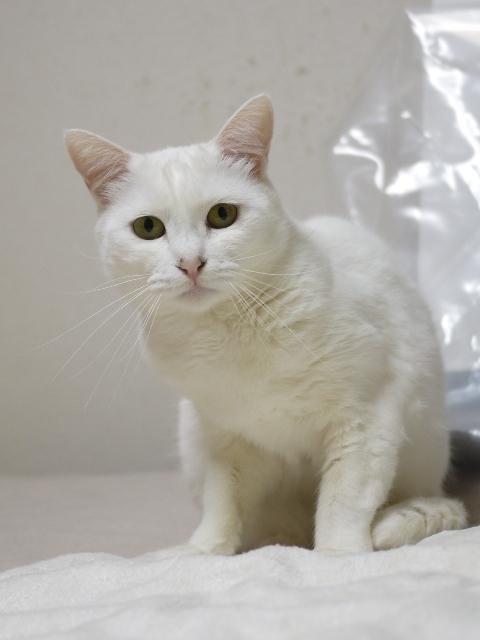猫のお留守番 天ちゃん編。_a0143140_22544151.jpg