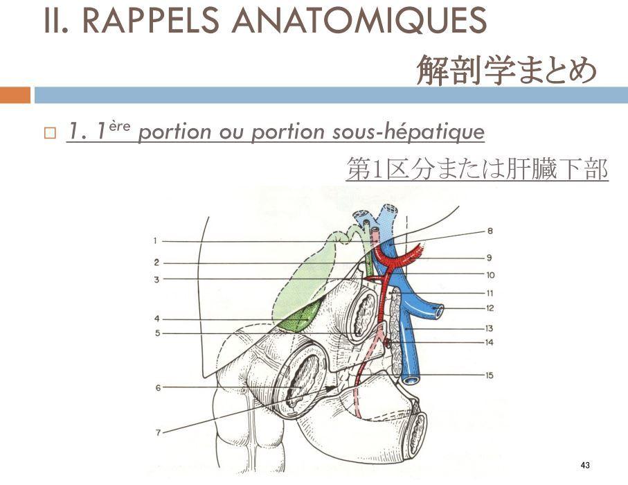 内臓オステオパシー_b0175343_23090375.jpg