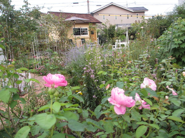 秋の庭(2)_a0243064_12323522.jpg
