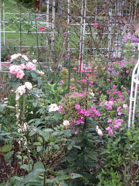 秋の庭(2)_a0243064_12450085.jpg