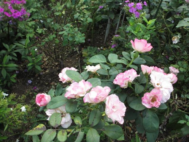 秋の庭(2)_a0243064_12454372.jpg