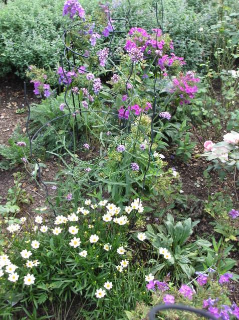 秋の庭(2)_a0243064_12492003.jpg