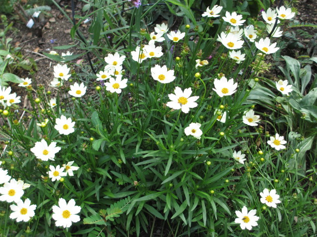秋の庭(2)_a0243064_12495305.jpg