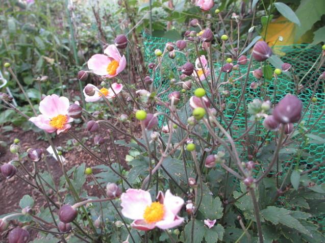 秋の庭(2)_a0243064_12553597.jpg