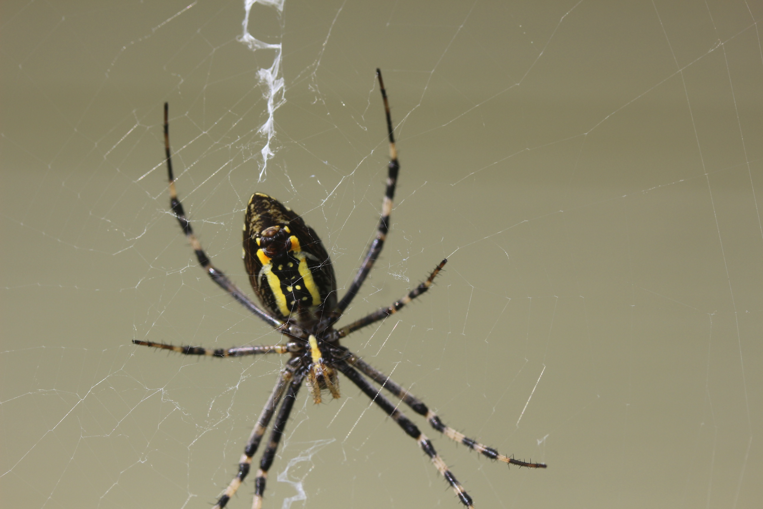 9月15日 蜘蛛_e0094102_08140406.jpg
