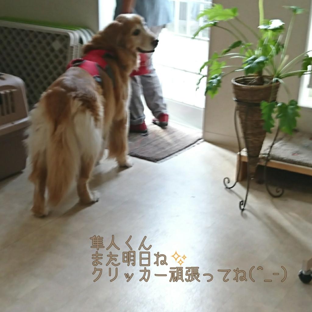 9月16日(土)…クリッカー道場&ADCT②_d0256356_23353224.jpg