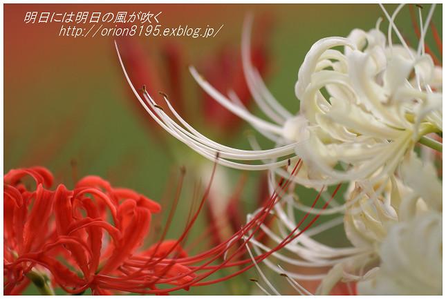 f0361079_19111943.jpg