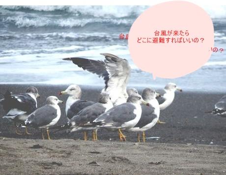 b0352112_15162250.jpg