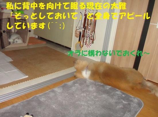 f0121712_23552104.jpg