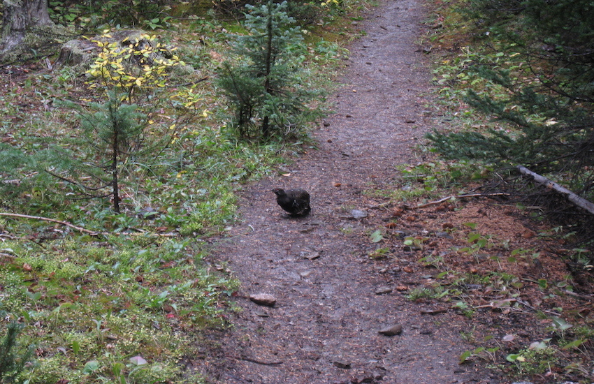 レイクルイーズエリアから更に奥へ スコーキーロッジ滞在ハイキング4日間_d0112928_07360984.jpg