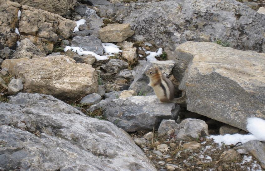 レイクルイーズエリアから更に奥へ スコーキーロッジ滞在ハイキング4日間_d0112928_07455162.jpg