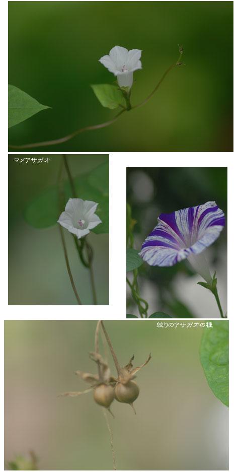 c0051105_16355633.jpg