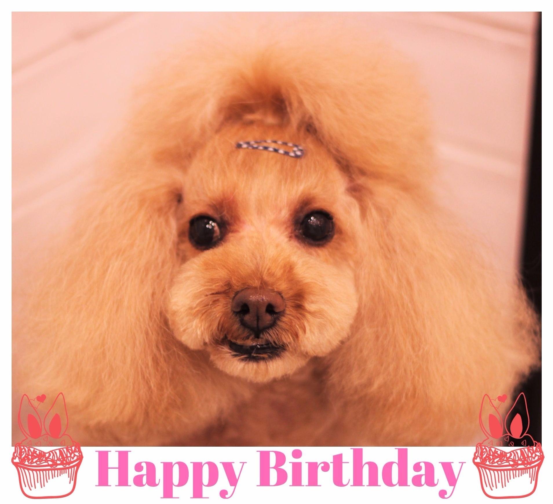 Happy Birthday ☆ プリンちゃん_d0060413_18134926.jpg