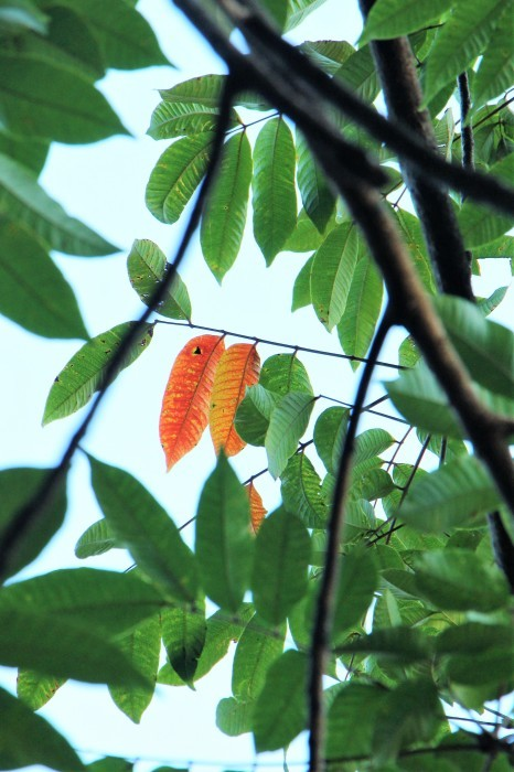 夏から 秋へ_d0150720_11435749.jpg