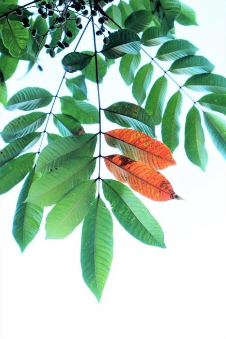 夏から 秋へ_d0150720_11441191.jpg