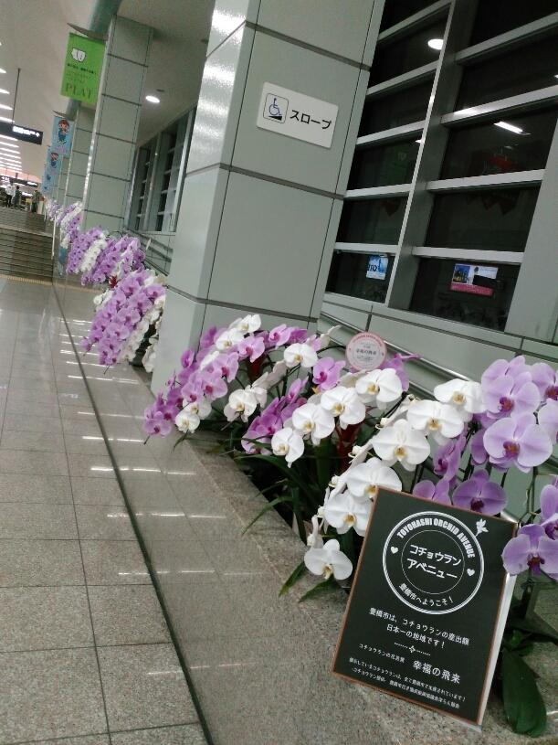 函館からのお友達_c0189426_08570152.jpg