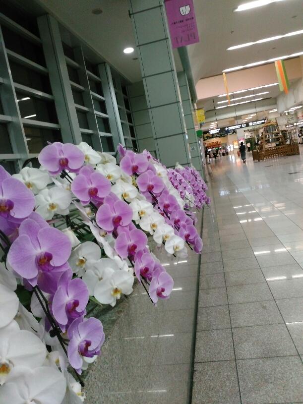 函館からのお友達_c0189426_08571118.jpg