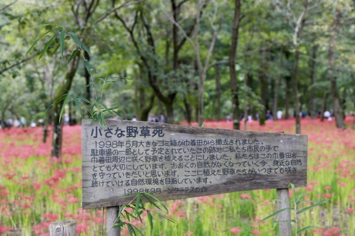 【巾着田 曼珠沙華公園】_f0348831_19465334.jpg