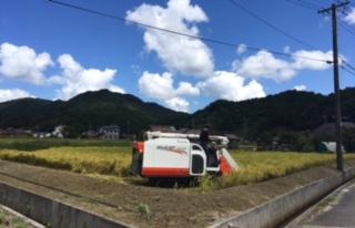 稲刈りと台風_f0071456_163057.jpg