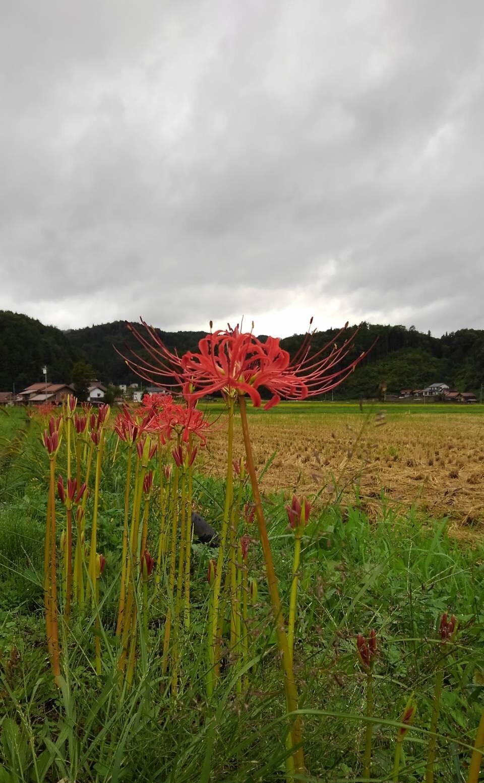 稲刈りと台風_f0071456_23155811.jpg