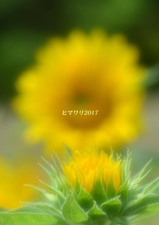 d0251161_10150835.jpg