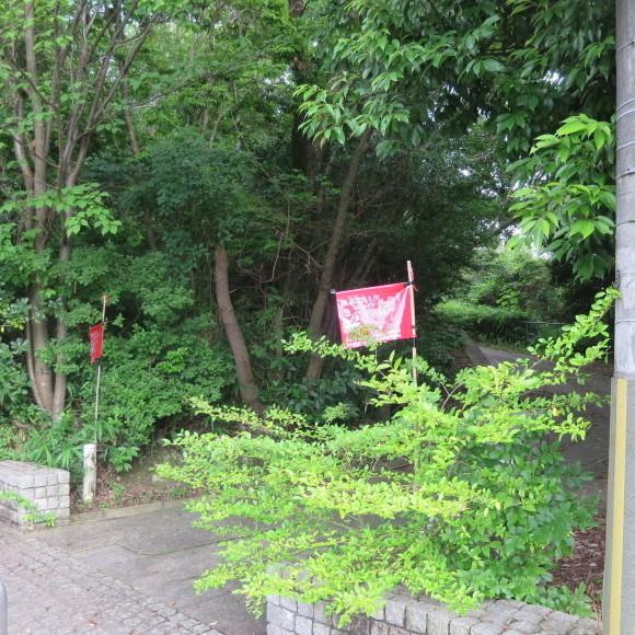 歌姫のかたきを興福院でとる 奈良 △´_c0001670_13530631.jpg