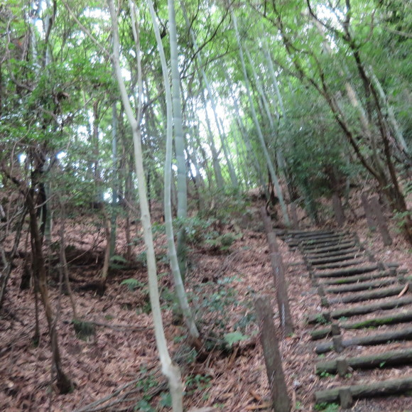 歌姫のかたきを興福院でとる 奈良 △´_c0001670_13585094.jpg