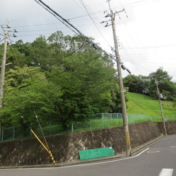 歌姫のかたきを興福院でとる 奈良 △´_c0001670_13595963.jpg