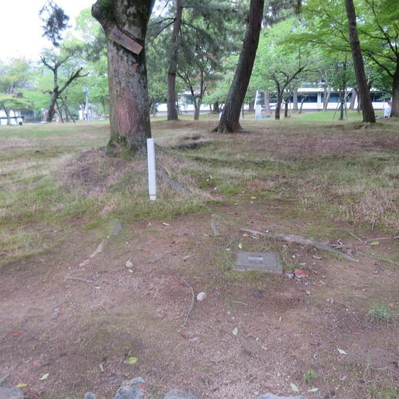 歌姫のかたきを興福院でとる 奈良 △´_c0001670_14141679.jpg