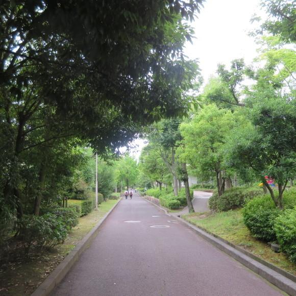 歌姫のかたきを興福院でとる 奈良 △´_c0001670_14305382.jpg