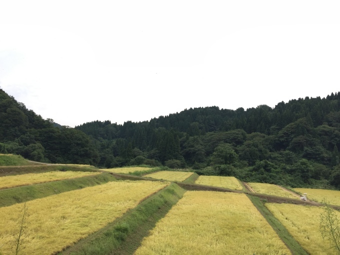 収穫の時_d0182179_19084884.jpg