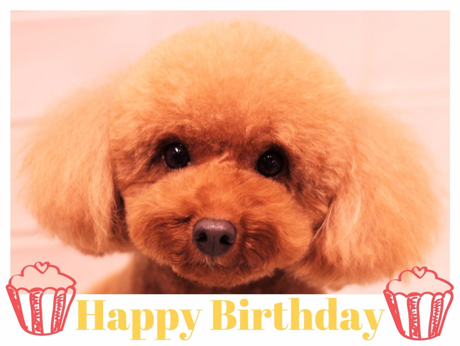 Happy Birthday ♡ マリンちゃん_d0060413_10125429.jpg