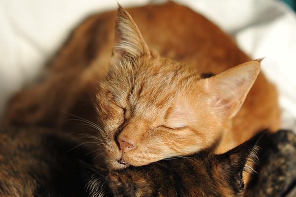 フジコ枕 & IKEAでペット用品シリーズが販売(10月上旬)_b0162726_21400383.jpg