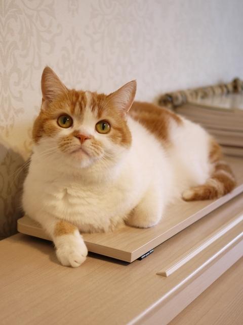 猫のお留守番 ももちゃん編。_a0143140_21471956.jpg