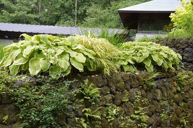 2017年7月18日 絵本の森美術館_c0124100_18151265.jpg