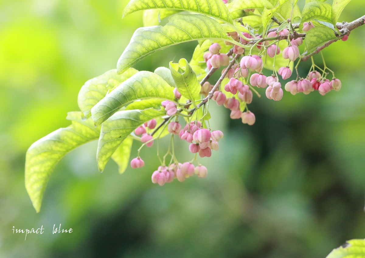 睡蓮の咲く公園に行って来た(*^^*)_a0355908_14291212.jpg