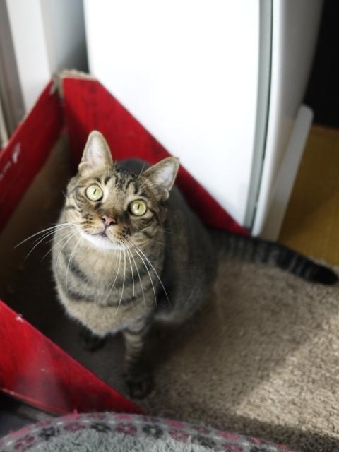猫のお留守番 ララちゃん編。_a0143140_19100973.jpg
