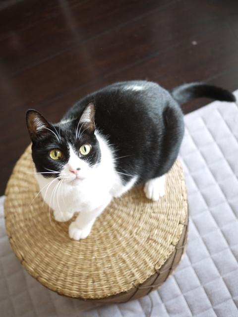 猫のお留守番 ピケちゃん編。_a0143140_19150815.jpg