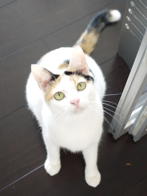 猫のお留守番 エンジェルちゃん編。_a0143140_19184547.jpg